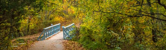 Nature Photography – Autumn in Bella Vista
